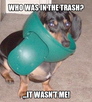 Who Was In The Trash?