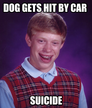 dog gets hit by car